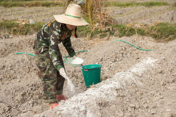 Woman gardeners put lime or calcium hydroxide into the soil to neutralize the acidity of the soil.