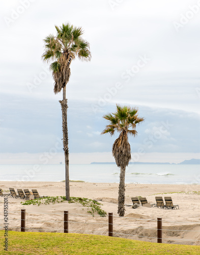 Palm trees at a beach in California, Pacific Ocean