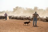 film stills at Weilmoringle NSW sheep muster at shearing shed - 243767212
