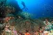 Quadro Scuba dive coral reef