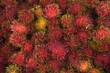 Rambutan fruit Nephelium lappaceum
