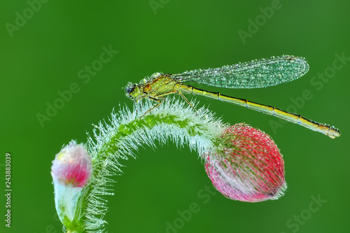 Macro shots, Beautiful nature scene dragonfly.  - 243883039
