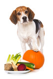 Beagle dog with vegetables isolated on white background - 243885240