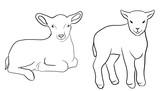 lamb line draw illustration