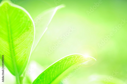Leinwandbild Motiv Fresh green leaf and overexposure of sunlight and flare filter on green nature blurred background at public park in morning, greenery season background, close-up and selective focus by macro lens