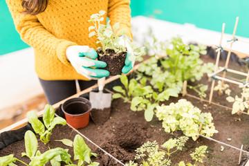 Woman Planting In Urban Garden © AntonioDiaz