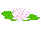 Beautiful pink lotus flower with green leaves in pond. Poster with water lily vector illustration isolated on white background.