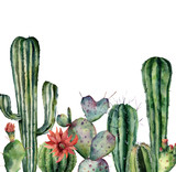 Watercolor card with cactus. Hand painted print with desert plants isolated on white background. Flowering cacti card for design, print. Nature botanical illustration - 243921612