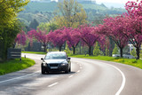 Frühling, Kirschbäume, Straße, Auto