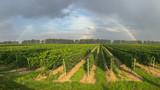 Fototapeta Tęcza - Rainbow over a vineyard on a summer day © Fabian