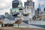 A seagull in the center of the city, against the background of the military cruiser Belfast, London, England