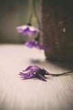 Trauer, Traurigkeit - Lila Blüte liegend auf hellem Holz - 244052833