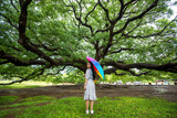 Woman standing in big tree in Thailand - 244062048
