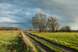 Traces of wheels and puddles on a dirt road through a green meadow, large trees and rainy clouds in the sky - 244063063