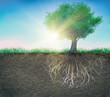 a tree and soil with roots and grass isolated