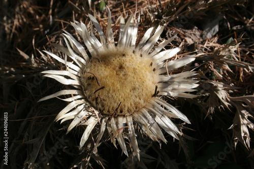 fiori e piante - 244096813