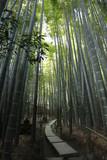 Fototapeta Bambus - 報国寺 竹林 © tokoriki