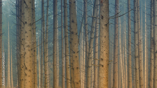 Landscape Premium Masterpiece - 244202655