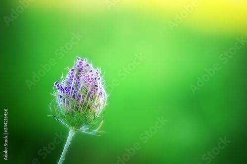 Nature Premium Masterpiece - 244215456