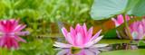 Panorama der Seerosen im Wasser - Gartenteich mit Pflanzen