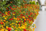 Colourful flower border flowering plants in a garden photo - 244244271