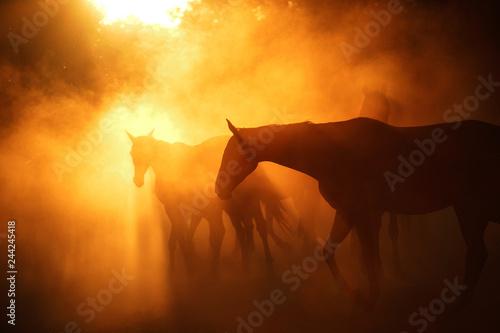 Herd of horses in sunset light. Horizontal, portrait, silhouette.