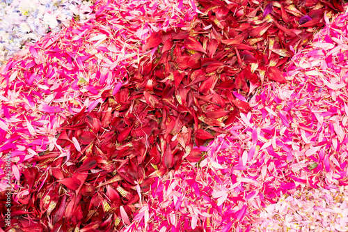 Foto Murales flowers petals background
