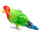 the tropical Red-cheeked lovebird parrot. watercolor illustration