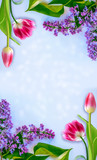 Fototapeta Tulipany - Bright and colorful flowers lilac. Holiday card © alenalihacheva
