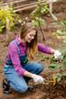 Leinwandbild Motiv soil preparation for planting. female gardener using a hoe at workplace. full length photo