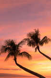 Fototapeta Zachód słońca - Palm Trees in a Maui Sunset © natureguy