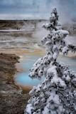 Yellowstone in Winter - 244360038