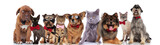 Fototapeta Koty - elegant team of nine adorable pets on white background © Viorel Sima