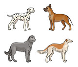Dogs of different breeds in color (set3) - vector illustration
