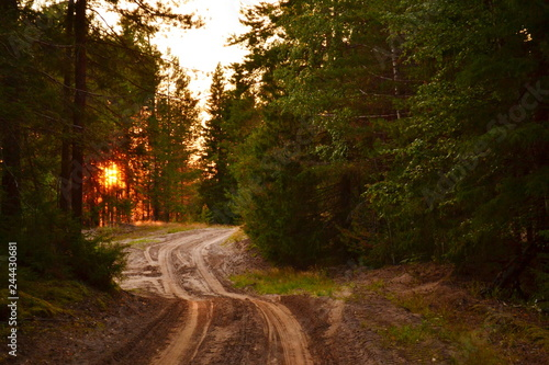 Sunset on the forest road