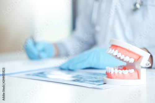 fototapeta na ścianę Dentist learning how to brush teeth