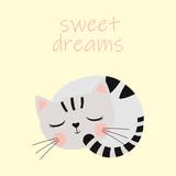 cute sleeping cat