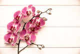 Fototapeta Storczyk - A branch of purple orchids on a white wooden background  © licvin