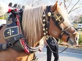 Detalle caballo - 244493203