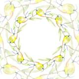 Olive watercolor background illustration set. Green leaf. Leaf plant botanical foliage. Frame border ornament square.