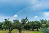Fototapeta Tęcza - Greece, Zakynthos, Magical colorful rainbow shining over olive tree grove © Simon