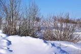 Beautiful winter landscape.Sunny day.