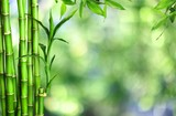 Fototapeta Sypialnia - Many bamboo stalks  on background © BillionPhotos.com
