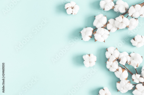 Flowers composition. Cotton flowers on pastel blue background. Flat lay, top view, copy space - 244601030