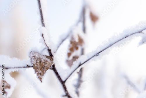 Winter details. Dry birch leaf in the snow halo. - 244620635