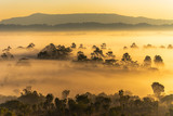 Fototapeta Sawanna - Mist cover forest during the sunrise at Thung Salaeng Luang National Park Phitsanulok and Phetchabun Provinces of Thailand © finallast