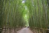 Fototapeta Bambus - Bamboo Forest in Miaoli Tai'an Township, Taiwan © chienmuhou