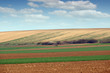 Plowed and green wheat fields agriculture Voivodina Serbia landscape