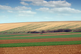 Plowed and green wheat fields agriculture Voivodina Serbia landscape - 244683018