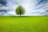 Baum in Landschaft - 244683643